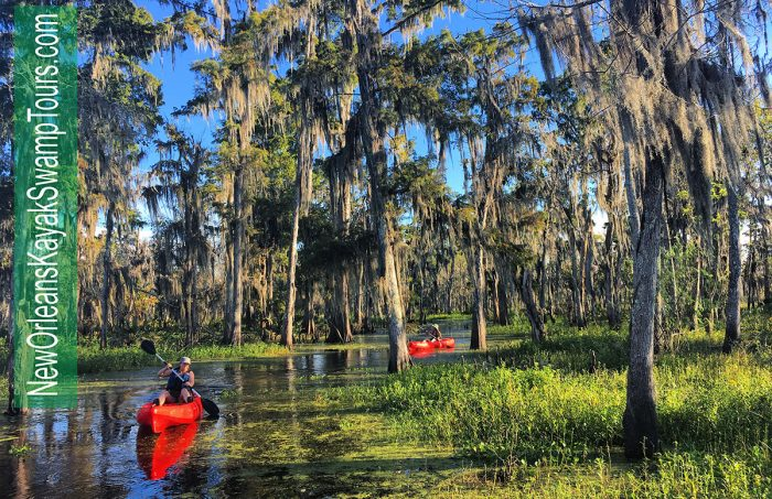 New Orleans Kayak Swamp Tours
